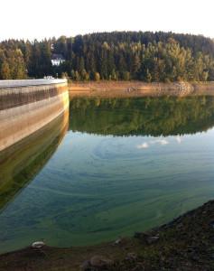 Talsperre Saidenbach_Cyanobakterien1_2011_Sachse_bearbeitet